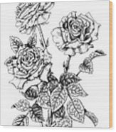 Pen And Ink Roses Wood Print