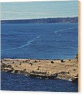 Peninsula De Valdez Wood Print