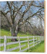 Penn Valley Tree Wood Print