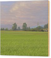 Penngrove Field Wood Print
