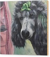 French Poodle  Wood Print