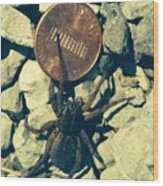 Penny Pinching Spider Wood Print