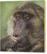Pensive Baboon Wood Print