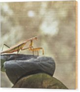 Pensive Mantis Wood Print