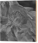 Peonie In Bw Wood Print