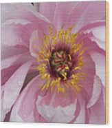 Peonie In Pink Wood Print