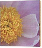 Peonie Yellow Center Wood Print