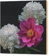 Peonies - Beautiful Flowers - On The Right Is One Of The First Places Among The Garden Perennials Wood Print