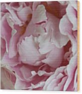 Peony Close Up Wood Print