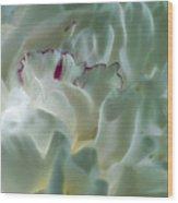 Peony Flower Energy Wood Print