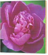 Peony In Pink Wood Print