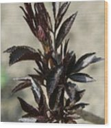 Peony Sprouts Wood Print