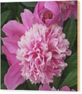 Peony With Ant Wood Print