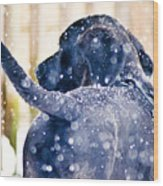 Pepper And The Snow Storm Wood Print
