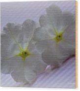 Peppermint Petunias Wood Print