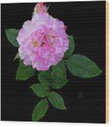 Peppermint Rose1 Cutout Wood Print