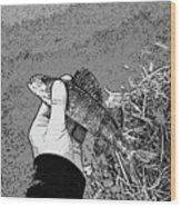 Perch Black And White Wood Print