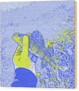 Perch Blue Yellow Wood Print
