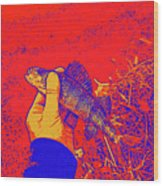 Perch Red Yellow Blue Wood Print