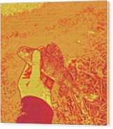 Perch Red Yellow Wood Print