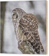Perched Barred Owl Wood Print