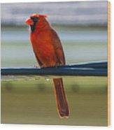 Perched Cardinal Wood Print