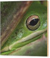 Frogy Eye Wood Print