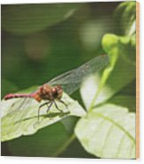 Perched Dragonfly Wood Print