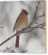 Perched Female Red Cardinal Wood Print