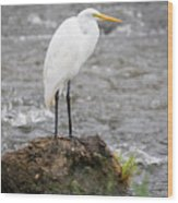 Perched Great Egret Wood Print