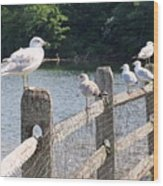 Perched Gulls Wood Print