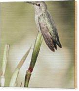 Perched Hummingbird On Flower Wood Print