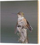Perched Hummingbird Wood Print
