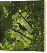Perched In Green  Wood Print
