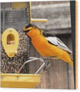 Perched Oriole Wood Print