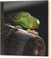 Perched Parakeet Wood Print