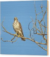 Perched Poser Wood Print