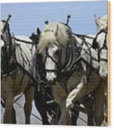Percherons Wood Print
