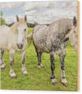Percherons Horses Wood Print