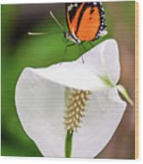 Perching Butterfly Wood Print