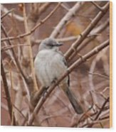 Perching On A Winter's Day  Wood Print