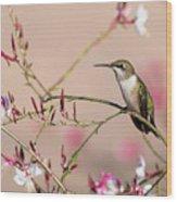 Perching Ruby-throated Hummingbird Wood Print