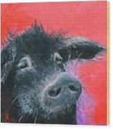 Percival The Black Pig Wood Print