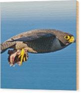Peregrine Falcon 2 Wood Print