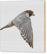 Peregrine Falcon Bird Wood Print by Bmse