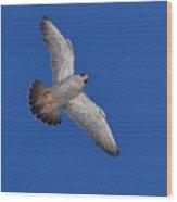 Peregrine Falcon I Wood Print