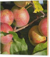 Perfect Apples Wood Print