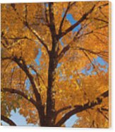 Perfect Autumn Day With Blue Skies Wood Print