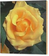 Perfect Bloom Wood Print