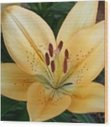 Perfect Butter Lilly Wood Print